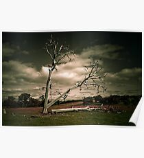 Timelapse of a Tree being Felled Poster