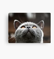 What Are you waiting for? Theres my chin Metal Print