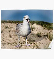 Seagulls Dune Poster