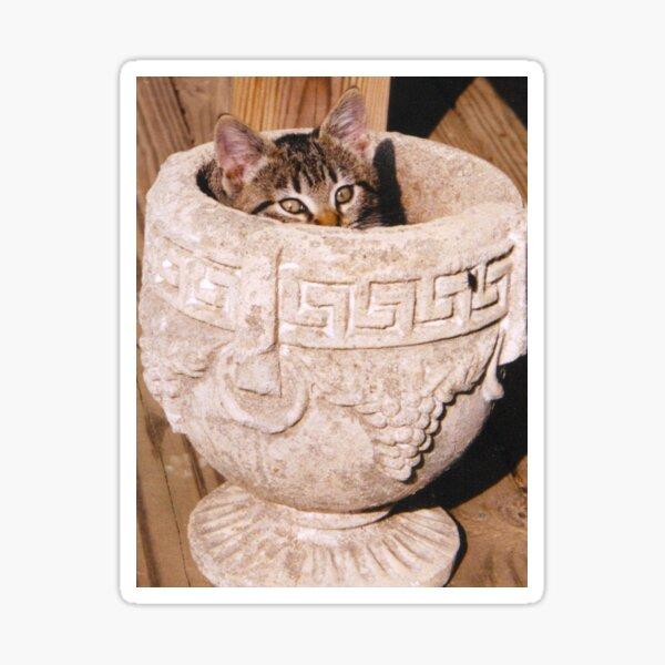 Kitten in Grecian Urn Planter Sticker