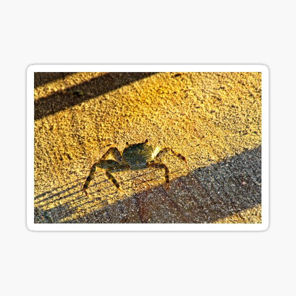 Feeling Crabby On Acuario Cay Sticker