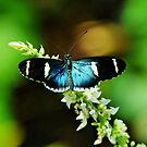 What A Butterfly by RickDavis