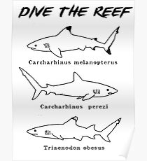 Dive the Reef Poster