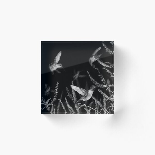 Hummingbird Black and White Art Acrylic Block