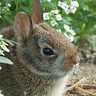 Fuzzy Garden Friend by Jamie Pauline