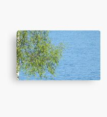 birch bunch of leaves the lake in the background Canvas Print