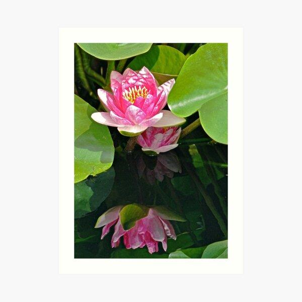 My Best Reflection - Waterlily Art Print