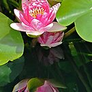 My Best Reflection - Waterlily by Cee Neuner