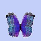 Lace Butterfly by jennyjeffries