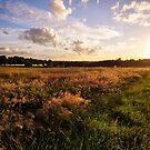 Summer Evening by Patrick Metzdorf