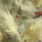 Dreamland by Marie-Eve Boisclair