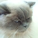 Peaceful cat by Marie-Eve Boisclair