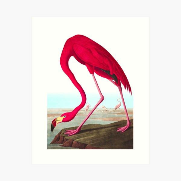 American Flamingo by John James Audubon Art Print