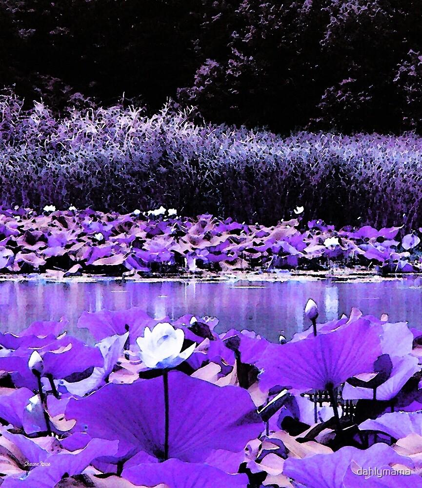 White Water Lotus by Shawna Rowe