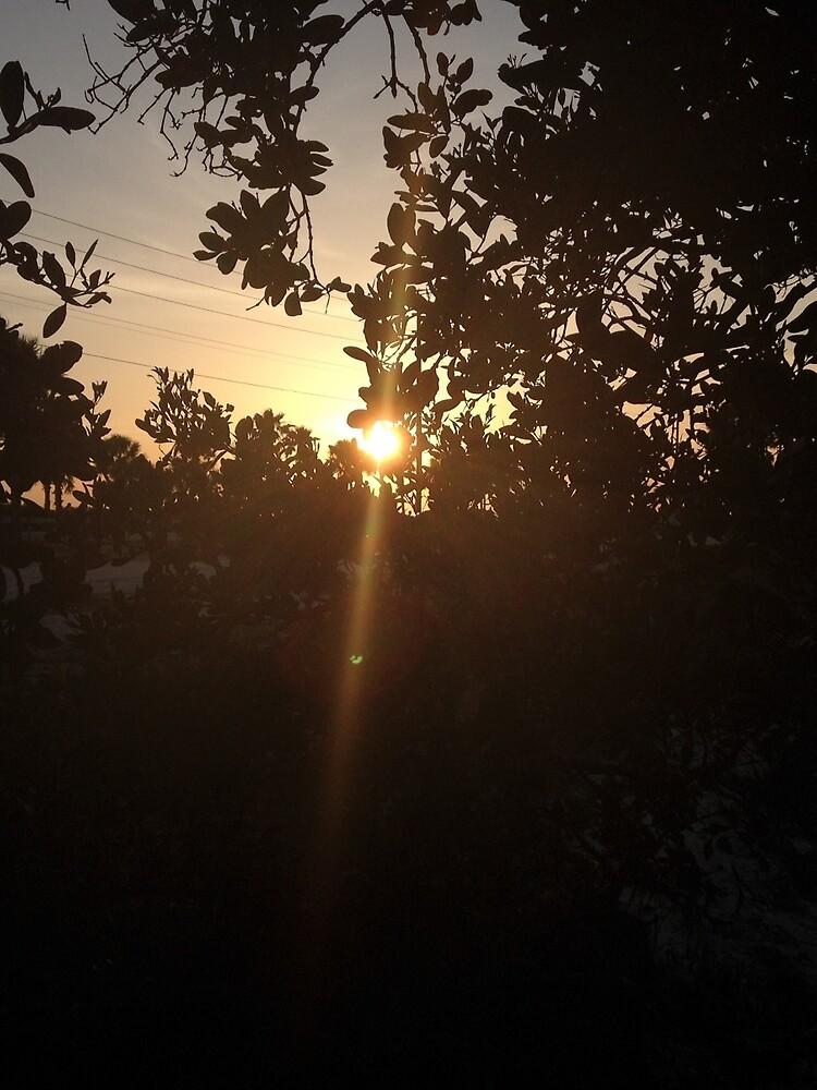Sonnenuntergang durch die Bäume von jenevieveb
