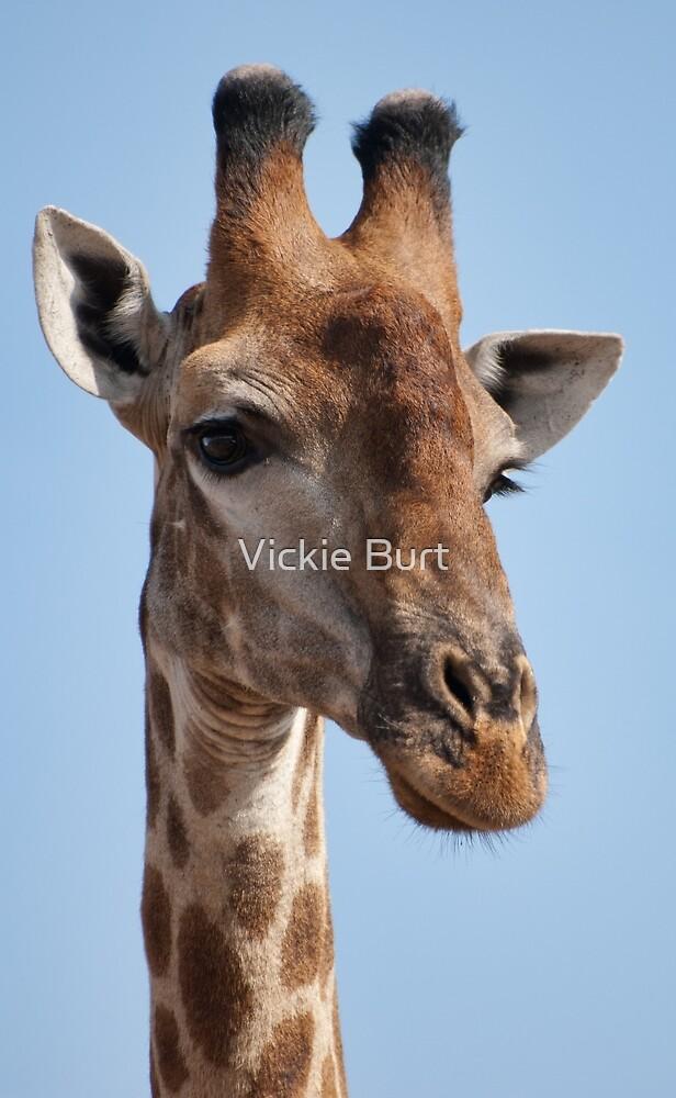 Giraffe Portrait (Giraffa camelopardalis) by Vickie Burt