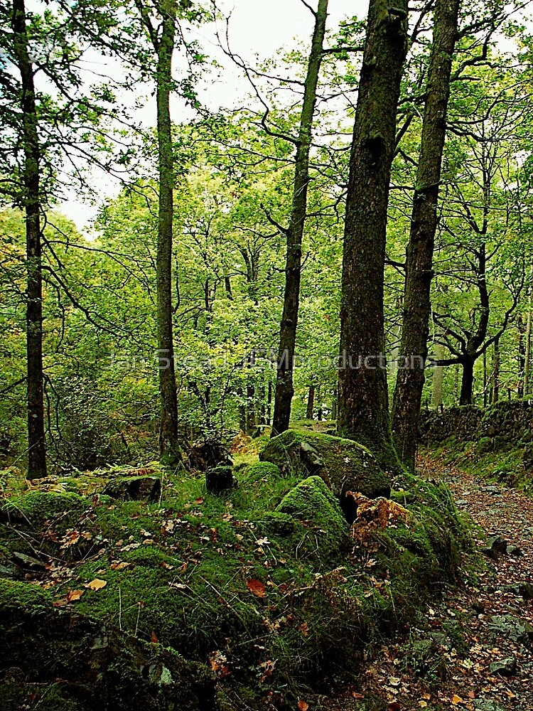 'neath mossy boughs by Jan Stead JEMproductions