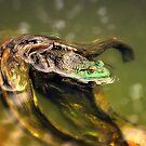 American Bullfrog by Sharon Woerner