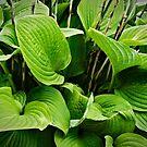 foliage I by NafetsNuarb