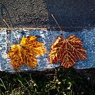 two left leaves by NafetsNuarb