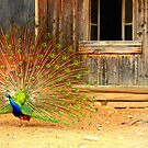 A peacock, a tree and a window by Michelle Neeling