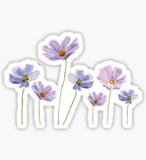 purple cosmos  Sticker