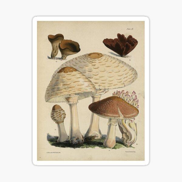 Mushroom print, brown Sticker