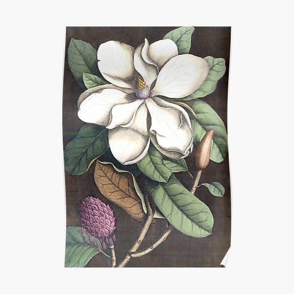 Magnolia Print Poster