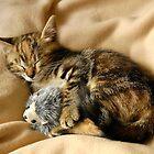 Cat n.3 by Carnisch