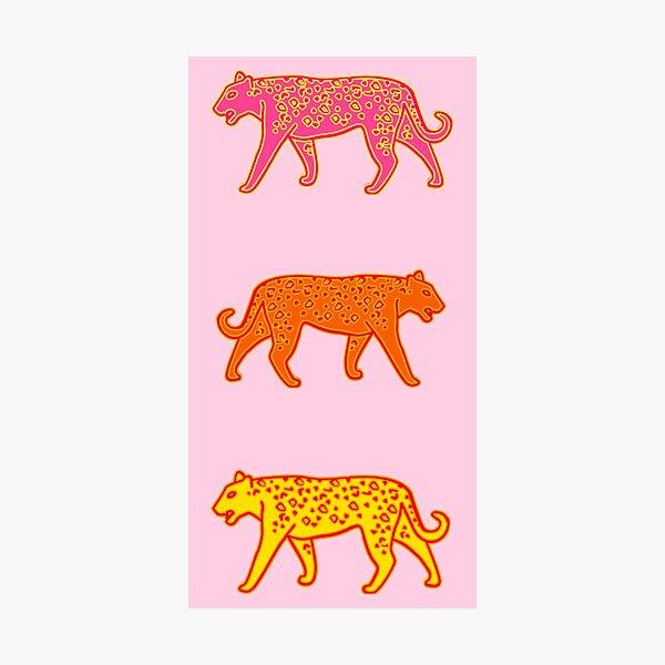 cheetah pack - pink, orange, yellow Photographic Print