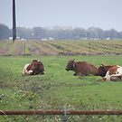 Bulls Relaxing 2 by Mimmie M. Hunter