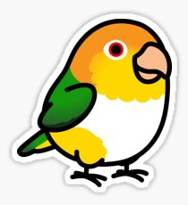 Was specially cute chubby bird decor opinion you