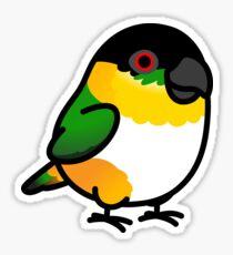 Chubby Black Headed Caique Sticker