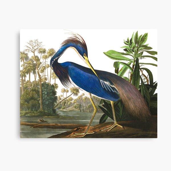 Louisiana Heron by John James Audubon Canvas Print