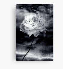 Wild Rose Canvas Print