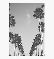 Boulevard Photographic Print