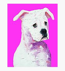 American Bulldog painting on pink Photographic Print