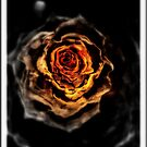 The Golden Rose by Kaye Bel -Cher