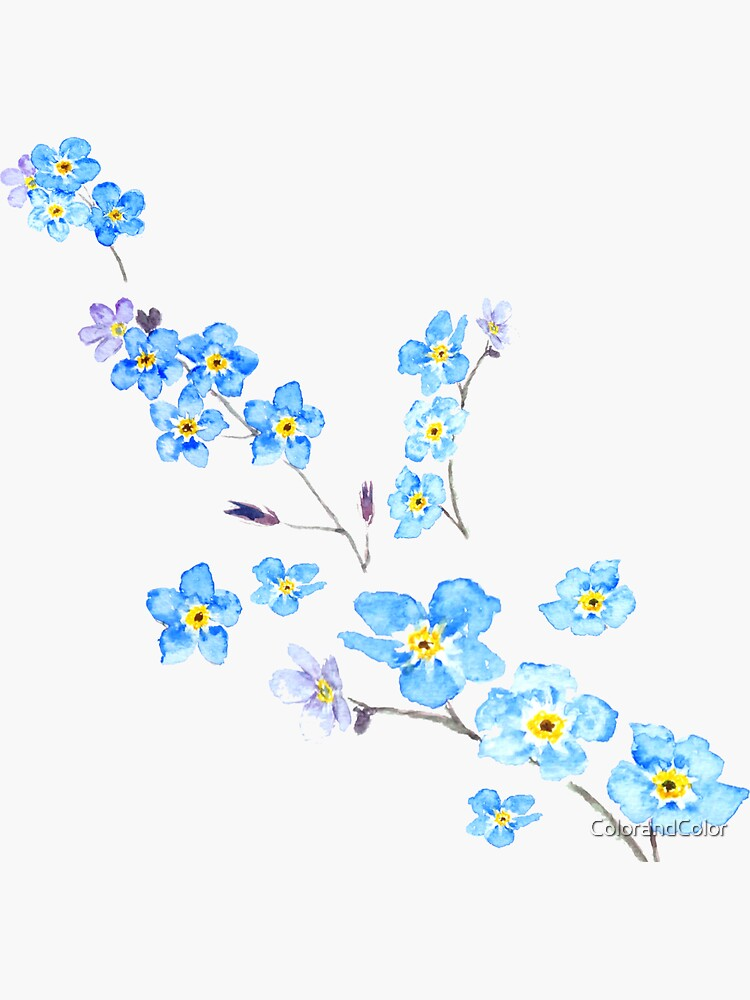 blue forget me not  by ColorandColor