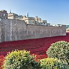 Tower Of London Poppies by Graham Prentice