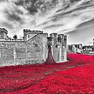 Poppies at The Tower Of London by Graham Prentice