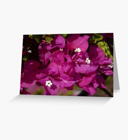 Brillitan Bougainvillea Greeting Card