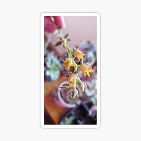 Echeverria flower Sticker