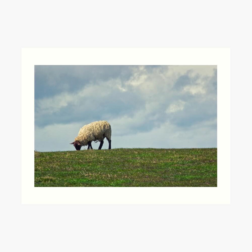 Sheep on the Hill Art Print