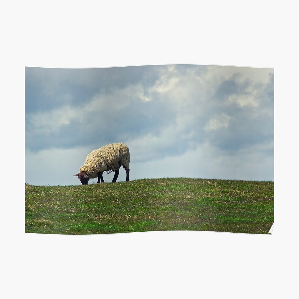 Sheep on the Hill Poster