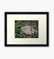 The Money Tree Framed Print