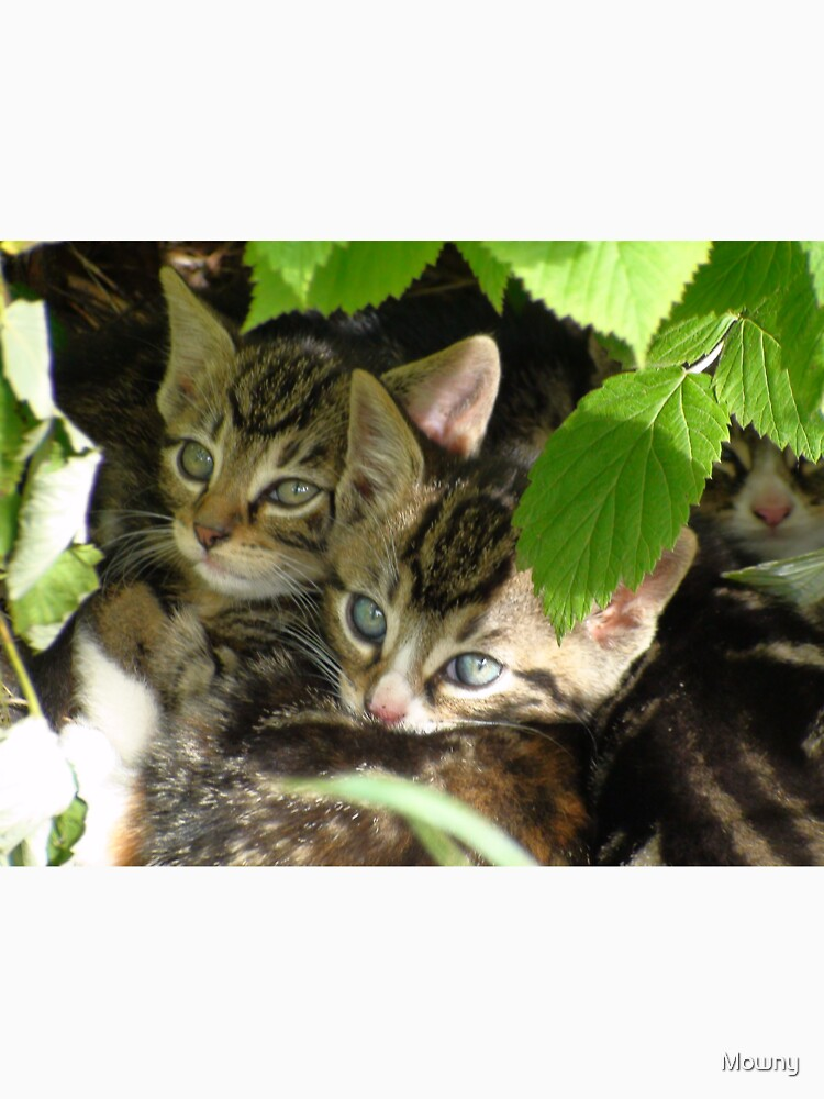 Kittens hiding by Mowny