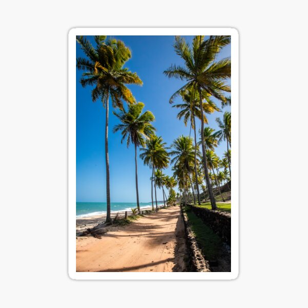 LONG BEACH AND TALL PALM TREES Sticker