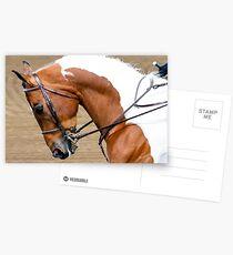 Arabische Pferdeshow Postkarten