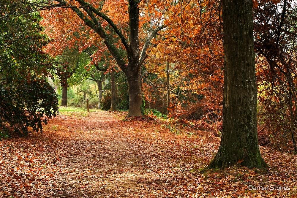 Cherry Walk - Bright by Darren Stones